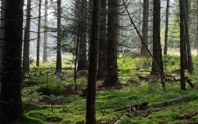 Le livre rouge de la nature menacée en Alsace